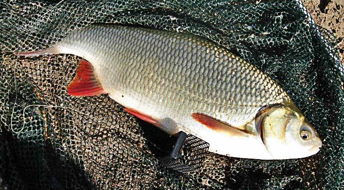 летняя осенняя рыбалка