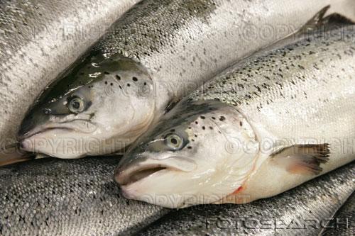 Добыча-лосося