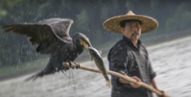 Рыбалка с бакланом